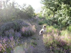 Howard Creek 2009