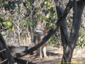 I heard something... bear?  coyote?