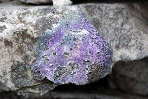 Purple Lichen - Paul Hadley