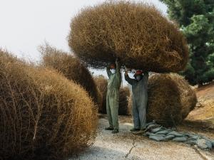 ngm-2013-tumbleweed-workers-cook-jenshel