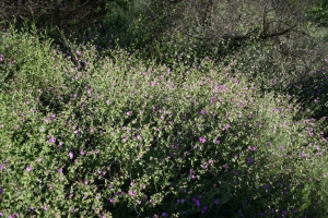 Wishbone bush